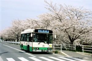 佐保川の桜並木を行く小型ノンステップバス