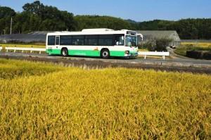 黄金の稲穂と山村町行きバス
