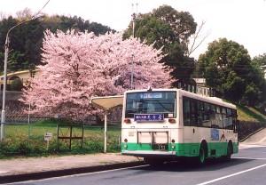 桜に見守られる南白橿停留所