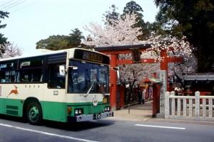 桜が咲き競う氷室神社の前を通過する市内循環バス