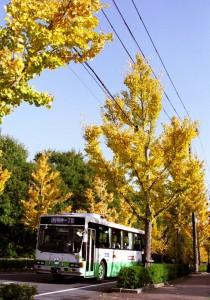 いちょう並木を行く明神一丁目行きバス